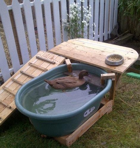 backyard-duck-habitat