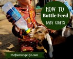 How To Bottle Feed A Goat