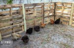 Pallet Project: Build A Cheap Chicken Run