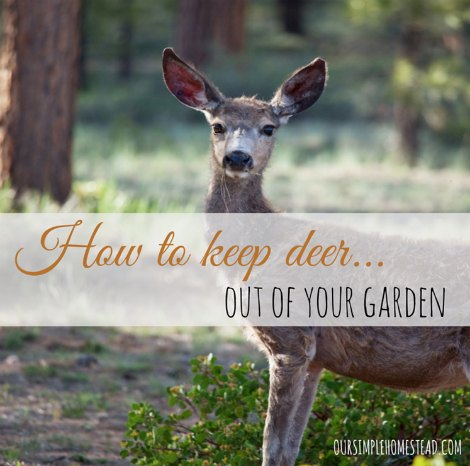 How To Keep Deer Out Of Your Garden Homestead Survival