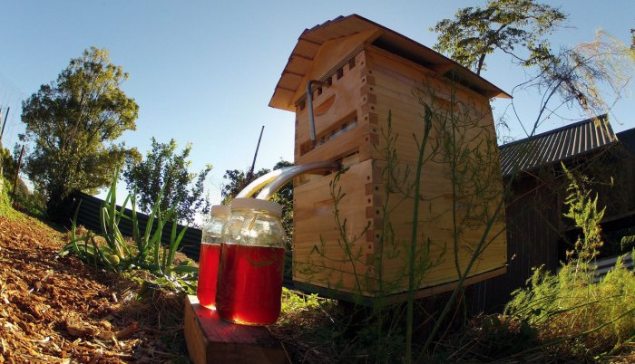 flow-hive-honey-on-tap-1