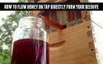 How To Flow Hive Honey On Tap Directly From Your Beehive