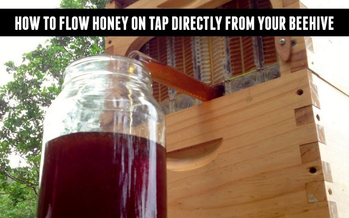 flow-hive-honey-on-tap