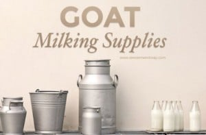 Essential Goat Milking Equipment