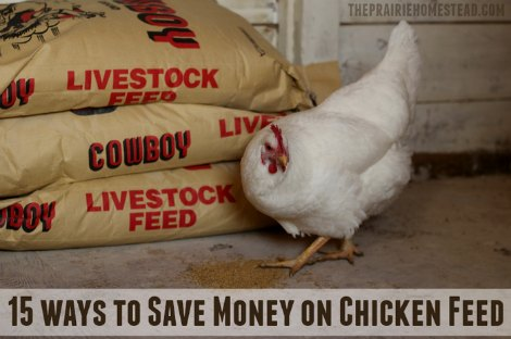 save-money-on-chicken-feed