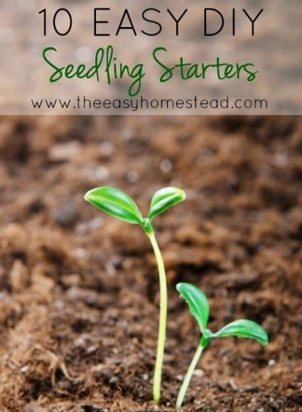 seedling-starters