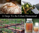 14 Steps To An Urban Homestead