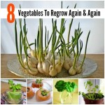 8 Vegetables To Regrow Again And Again