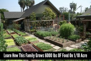 6000-lbs-of-food