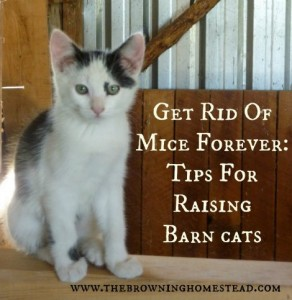 Tips For Raising Barn Cats