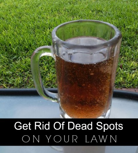 how to effortlessly get rid of dead spots on your lawn