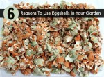 6 Convincing Reasons To Use Eggshells In Your Garden