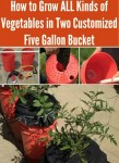 How To Grow Vegetables In Five Gallon Buckets