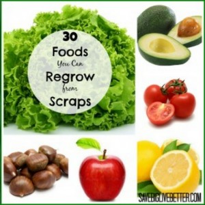 30 Foods To Regrow From Scraps