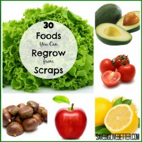 foods-to-regrow