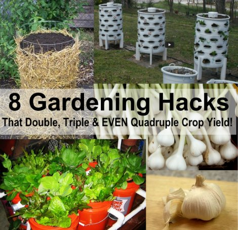 8 gardening hacks that could double triple even quadruple crop yield - Garden Hacks