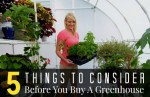 5 Things To Consider Before You Buy A Greenhouse