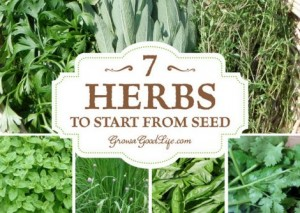 7 Herbs To Start From Seed