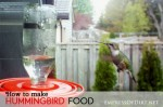 How To Make Hummingbird Food And Choose A Feeder