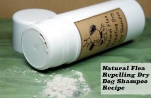 natural-flea-repellent-dog-shampoo
