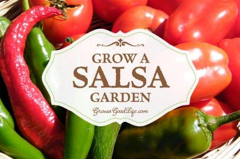 salsa-garden