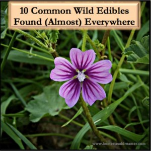 10 Common Wild Edibles Found Almost Everywhere