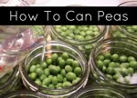 Canning Peas Using The Cold Pack Method