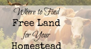 Where To Find Free Land For Homesteading