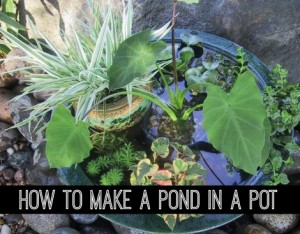 How To Make A Pond In A Pot