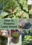 How To Preserve Leafy Greens