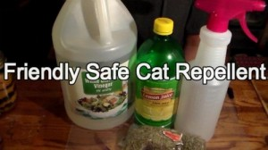 Friendly (But Effective) Cat Repellent