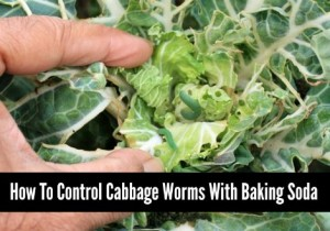 How To Control Cabbage Worms With Baking Soda