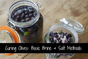 Curing Olives: Basic Brine & Salt Methods