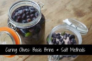 curing-olives