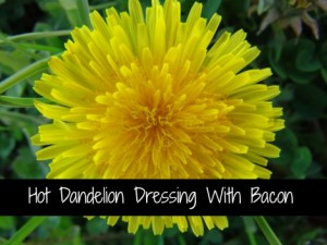 Hot Dandelion Dressing With Bacon – A Recipe From 1946