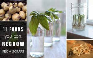11 Foods You Can Regrow From Scraps