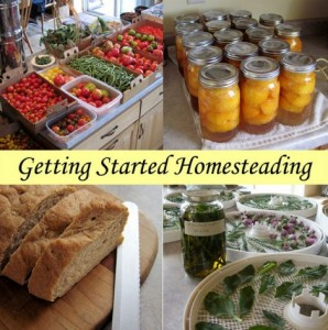 Getting Started Homesteading | Homesteading For Beginners