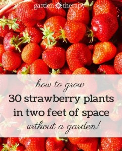 How To Grow 30 Strawberry Plants In 2 Feet Of Space
