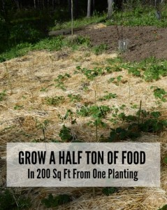 Grow A Half Ton Of Food In 200 Sq Ft From One Planting