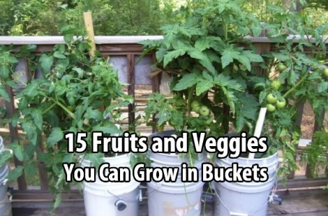 grow-in-buckets