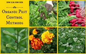 7 Organic Pest Control Methods
