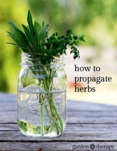 propagate-herbs
