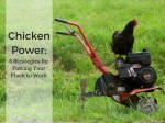8 Strategies For Putting Your Chicken Flock To Work