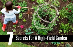 7 Secrets For A High-Yield Garden