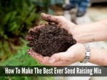 How To Make The Best Ever Seed Raising Mix