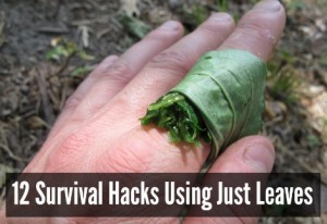 12 Survival Hacks Using Just Leaves