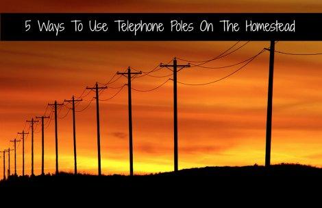 telephone-poles