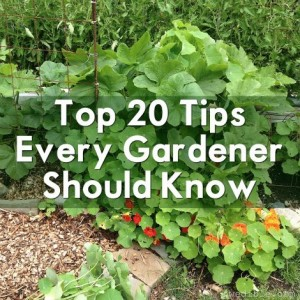 tips-every-gardener-should-know