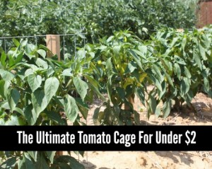 How To Make The Ultimate Tomato Cage For Under $2
