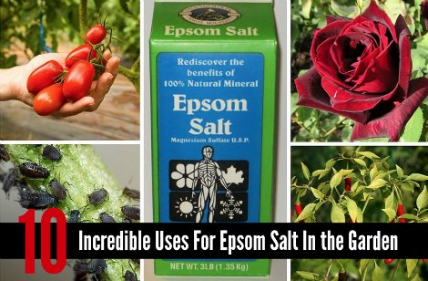 uses-for-epsom-salt in-the-garden